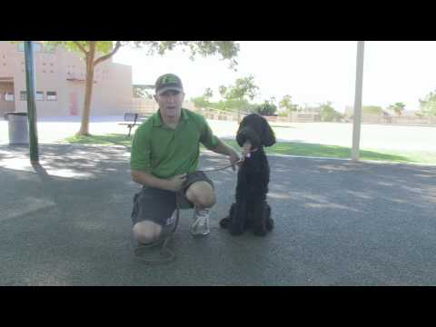 How To Prevent and Stop Dog Barking