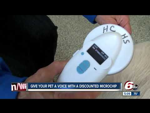 Pet owners can get discounted microchip for animals in Hendricks County