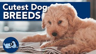 The Cutest Dog Breeds!