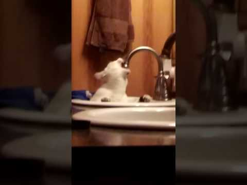 Cat attacking faucet