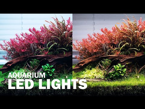 DIFFERENT LED LIGHTS ON OUR AQUASCAPE