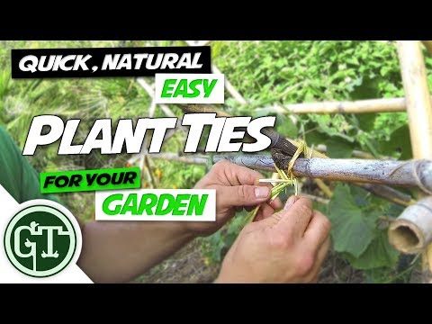 Quick, Natural & Easy Plant Ties for Your Garden - Tieing Cucumber Vine