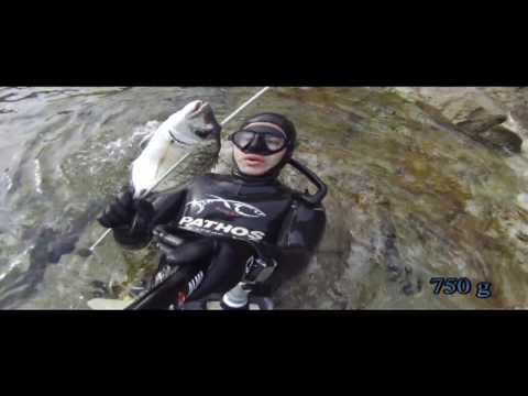 Spearfishing - Shallowest white sea bream catch ever