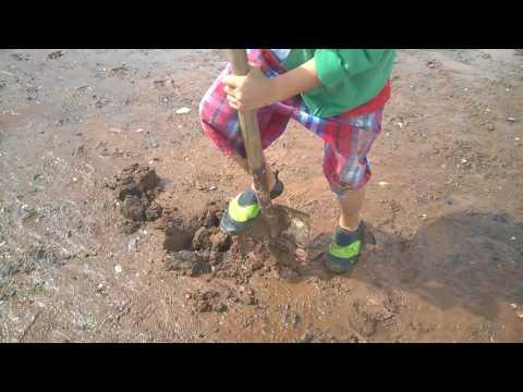 Jonathan's digging clams at Bay of Fundy