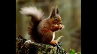 How To Get Rid Of Squirrels In Your Yard Ultimate Squirrel Repellents