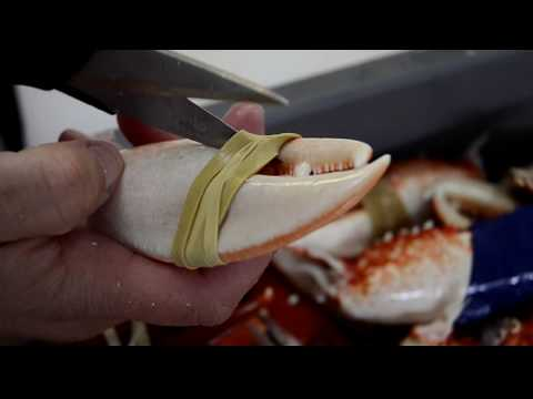 How to cleanly break into cooked lobster claws