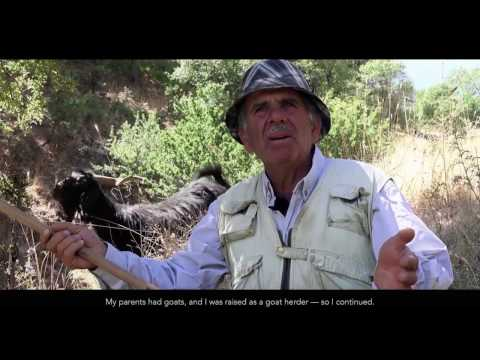 Lost Cheese of the Lebanese Mountain – Serdeleh / Anbarees Cheese