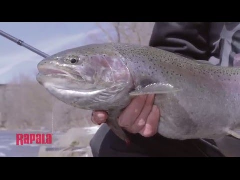 Best Artificial Bait Substitute for Salmon or Trout Egg Sacks | Rapala Fishing Tips