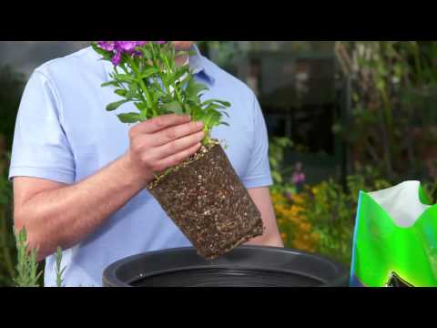How to Pot a Plant with Use Potting Mix
