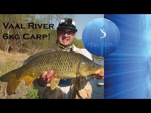 Big Common Carp Caught In The Vaal River On bait | Fish The Sea