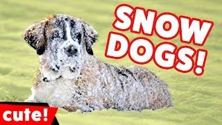 Funniest Dogs Playing In Snow Videos Weekly Compilation 2016 | Kyoot Animals
