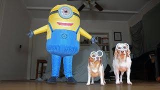 Dogs vs Giant Minion Prank: Funny Dogs Maymo, Penny, & Potpie