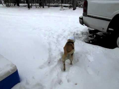 Happy Hoodie Keeping Dog's Ears Warm In Winter