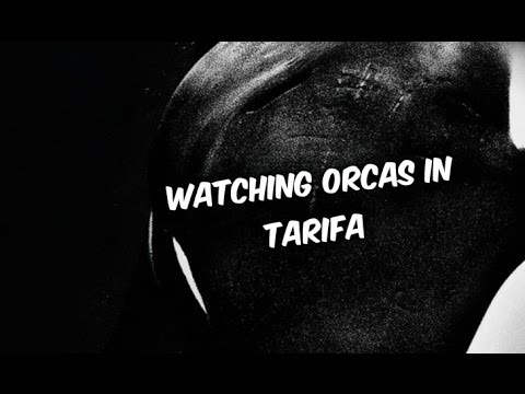 Must see in Andalusia: Watching Orcas in Tarifa (Spain) || 2016 || iPhone || HD