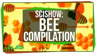 SciShow: Bees Compilation
