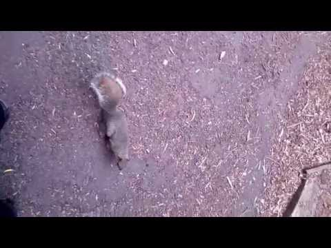 Squirrel in slow motion
