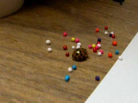 Ladybug plays with sprinkles!