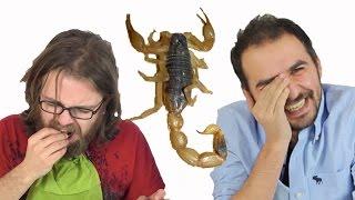 Download Böcek Yeme Kapışması (Çekirge, Cırcır Böceği, Akrep Yedik)