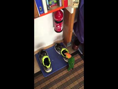 Caique Auguste and visitor's shoes