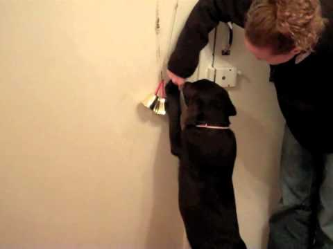 Puppy toilet training with a bell