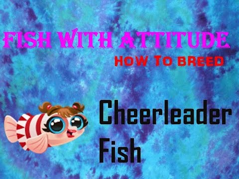 Fish With Attitude: How to breed the Cheerleader Fish