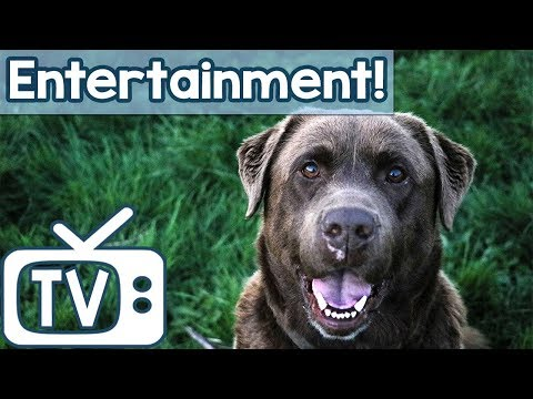 Animal Entertainment TV for Dogs! Hours of Sheep & Horse Footage for Dogs to Relax and Chill Out To!