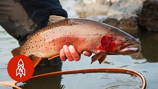 Tracking Trout With the Fish Whisperer | That's Amazing