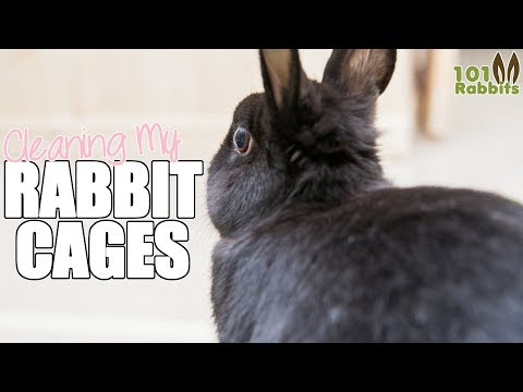 Cleaning My Rabbit Cages