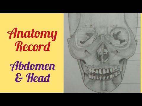 Medical student Anatomy Record Body parts Diaghrams MBBS/ BAMS/ BHMS Medicine