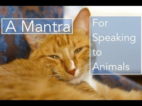 How to Learn How to Speak to Animals--The Pashupatayei Shiva Mantra