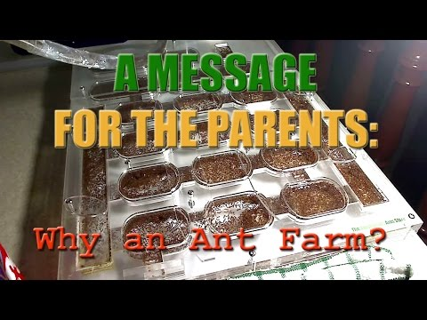 Why An Ant Farm? A Message For The Parents