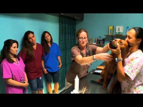 WCC Veterinary Assistant Program