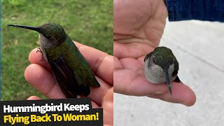 Hummingbird keeps flying back to woman who rescued it.
