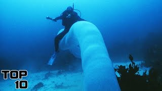 Top 10 Giant Creatures Caught On Camera