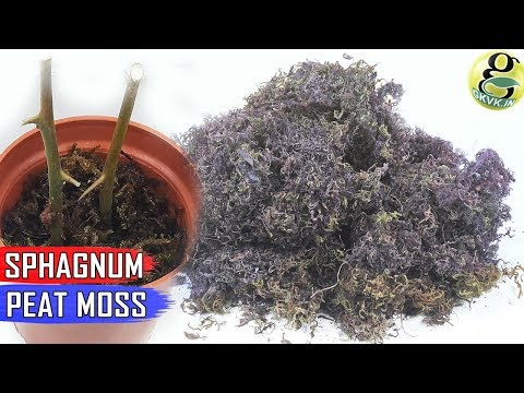 Sphagnum Peat Moss in Gardening: Benefits, How to Use and How Much in Potting Mix