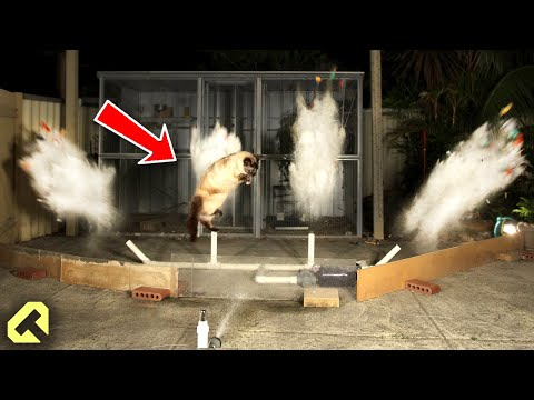 How to Stop Cats - Funny Cat Repellent!