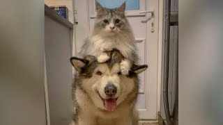 Forget vaccine - FUNNY ANIMALS are the best CORONA cure!