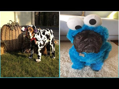 Funniest Dogs In Halloween Costumes | You WONT BELIEVE Until You See It | Bigoted