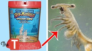 10 Most MESSED UP Toys For Kids