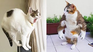 Watch OUT! That Cat Is About to POUNCE  - | LIFE FUNNY PETS 🐯🐶