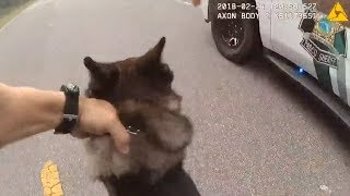 sheriff k9 Videos - 9tube tv