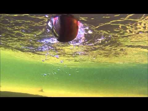 Cottonwood Lakes Golden Trout Fishing