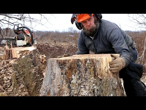 CRAZY STUMP REMOVAL TRICK (funny- not how to)