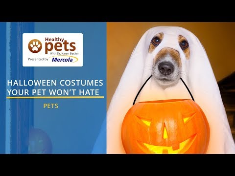 Halloween Costumes Your Pet Won't Hate