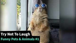 The Funniest Pet Animal Videos  - TRY NOT TO LAUGH 😂 #1