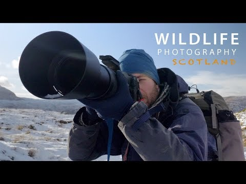 PHOTOGRAPHING STAGS in SCOTLAND | Behind the scenes with wildlife photographer Morten Hilmer