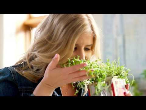 DIY Herb Garden for Spring