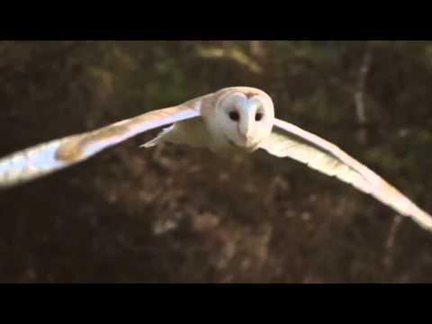 CLAW barn owl nesting box program