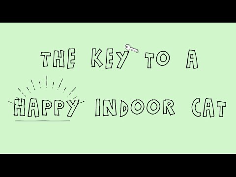 The Key to a Happy Indoor Cat