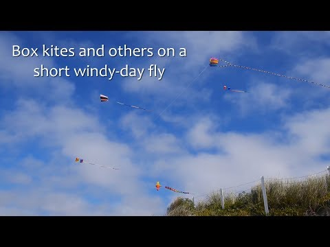 Box kites and others on a short windy-day fly